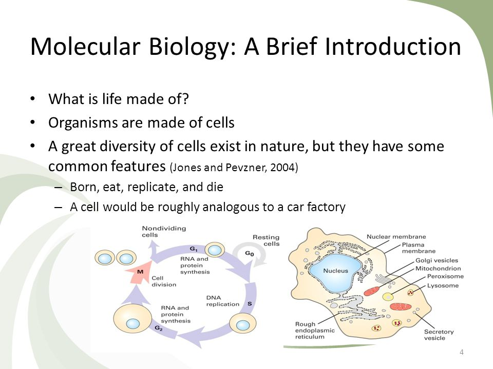 Molecular Biology: A Brief Introduction What is life made of? Organisms are made of cells A great diversity of cells exist in nature, but they have so