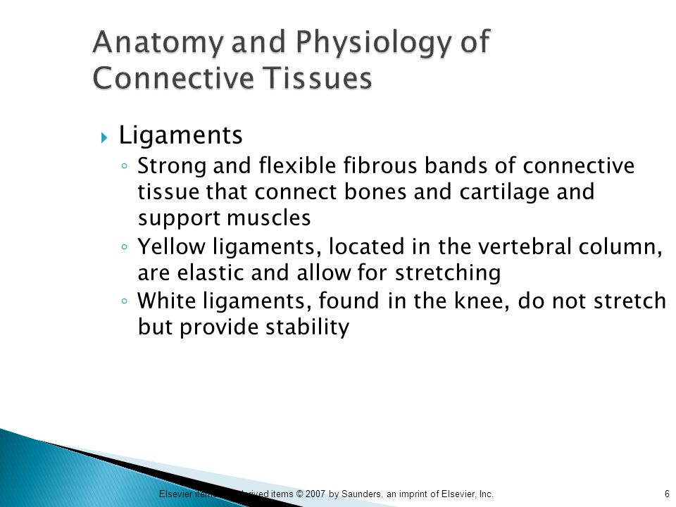 6Elsevier items and derived items © 2007 by Saunders, an imprint of Elsevier, Inc. Anatomy and Physiology of Connective Tissues  Ligaments ◦ Strong a
