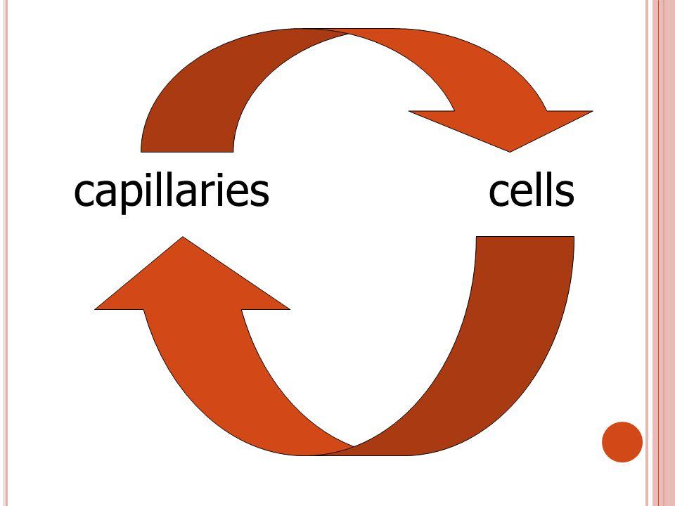 capillariescells