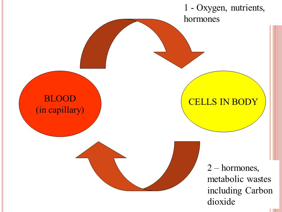 BLOOD (in capillary) CELLS IN BODY 1 2 1 - Oxygen, nutrients, hormones 2 – hormones, metabolic wastes including Carbon dioxide