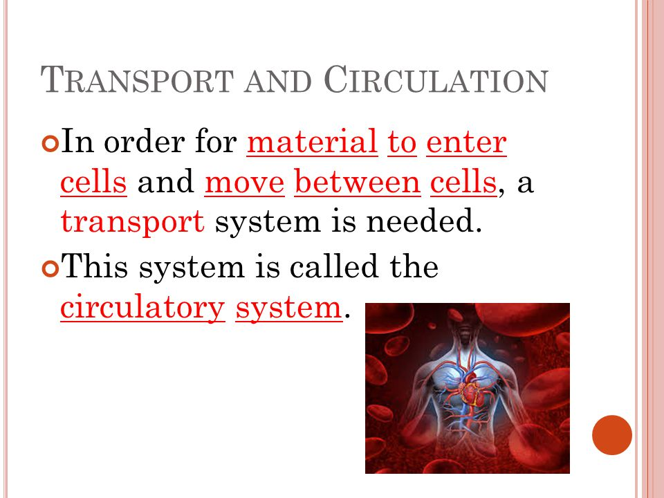 T RANSPORT AND C IRCULATION In order for material to enter cells and move between cells, a transport system is needed.