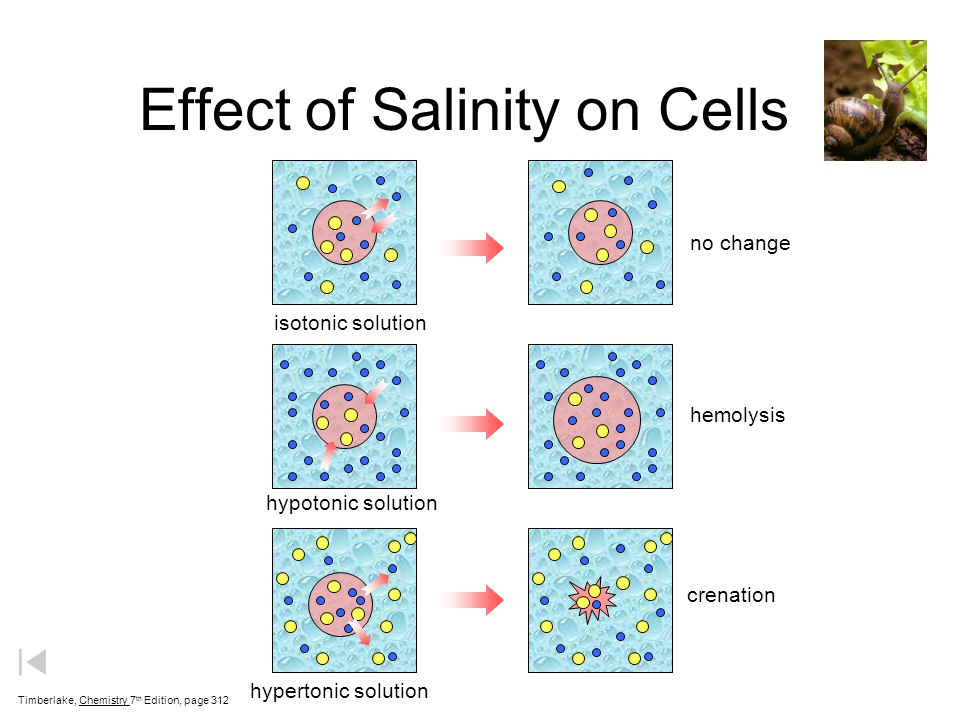 Effect of Salinity on Cells Timberlake, Chemistry 7 th Edition, page 312 isotonic solution no change hypotonic solution hemolysis crenation hypertonic solution