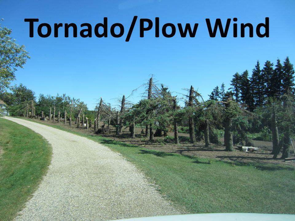 Tornado/Plow Wind