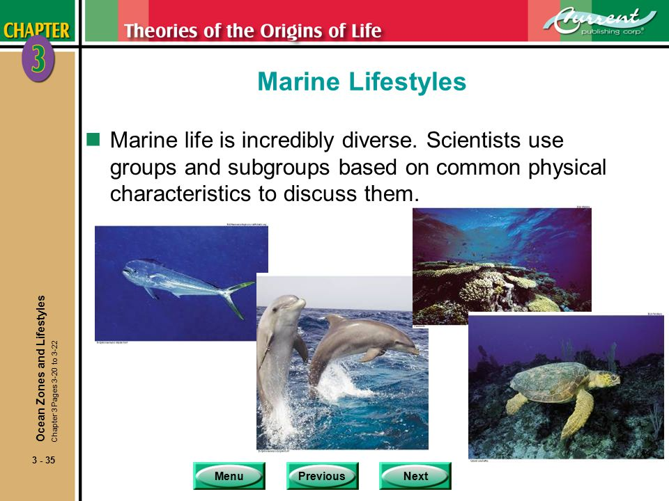 MenuPreviousNext 3 - 35 Marine Lifestyles nMarine life is incredibly diverse.