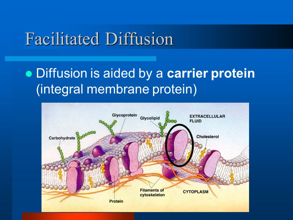 Facilitated Diffusion Diffusion is aided by a carrier protein (integral membrane protein)
