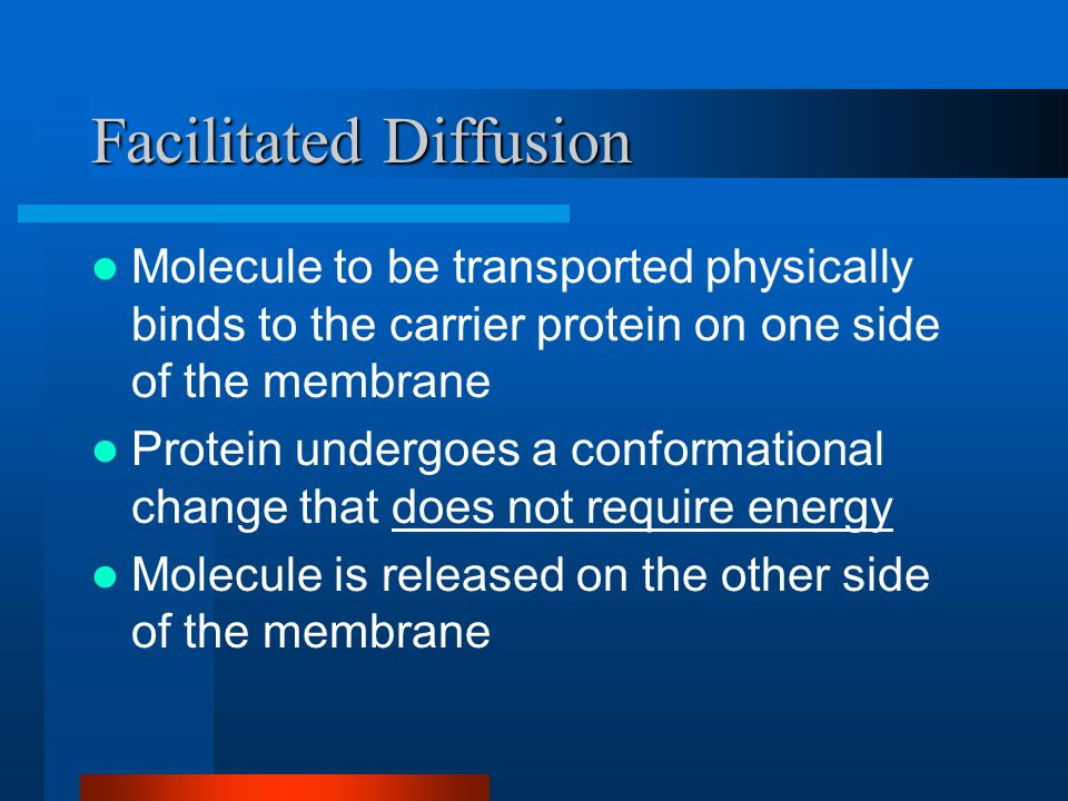 Facilitated Diffusion Molecule to be transported physically binds to the carrier protein on one side of the membrane Protein undergoes a conformational change that does not require energy Molecule is released on the other side of the membrane