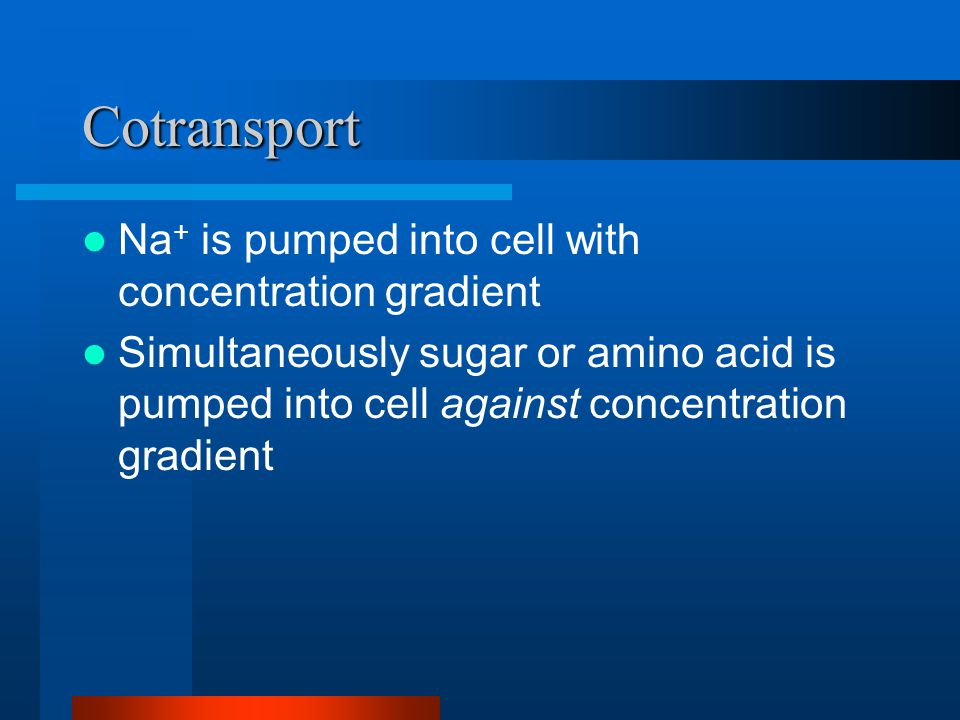 Cotransport Na + is pumped into cell with concentration gradient Simultaneously sugar or amino acid is pumped into cell against concentration gradient