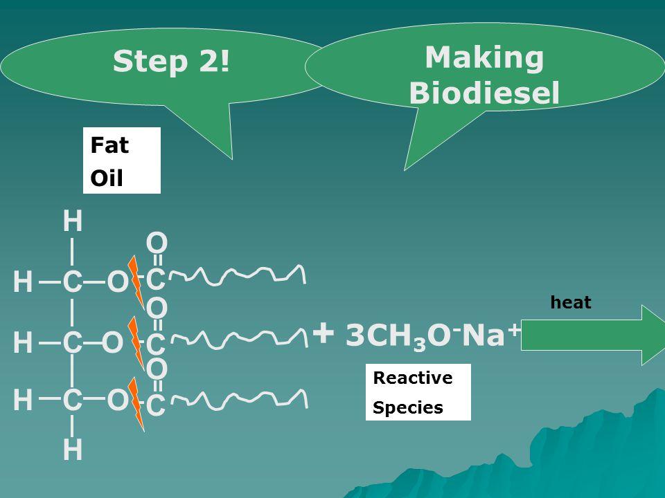 COH CO OCH H H H C O C O C O + 3CH 3 O - Na + heat Step 2! Making Biodiesel Oil Fat Reactive Species