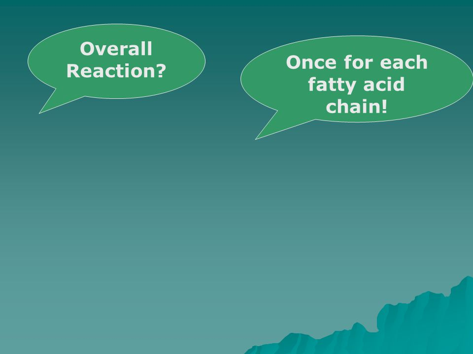 Once for each fatty acid chain! Overall Reaction