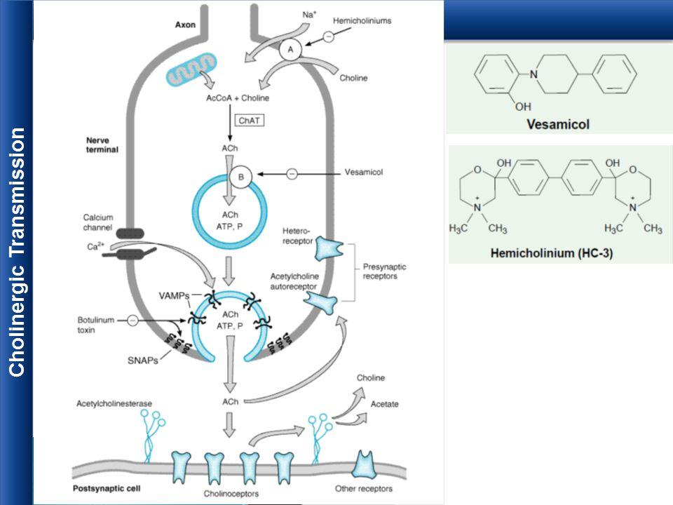 Cholinergic Transmission
