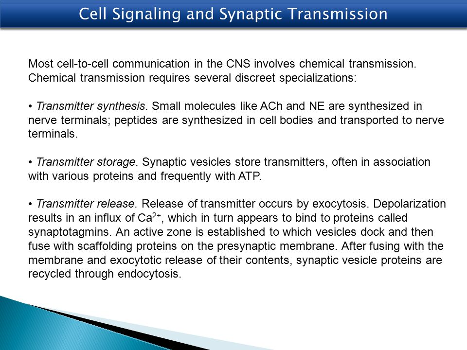 Transmitter recognition.Receptors exist on postsynaptic cells, which recognize the transmitter.