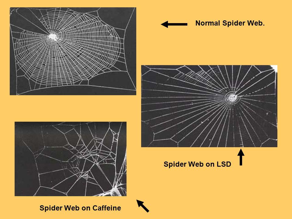 Normal Spider Web. Spider Web on LSD Spider Web on Caffeine