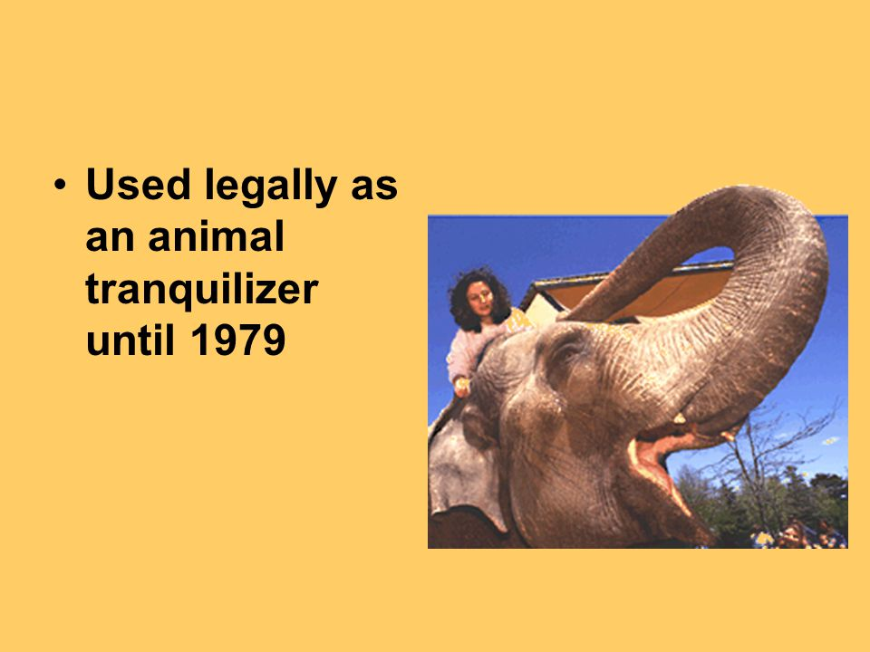 Used legally as an animal tranquilizer until 1979