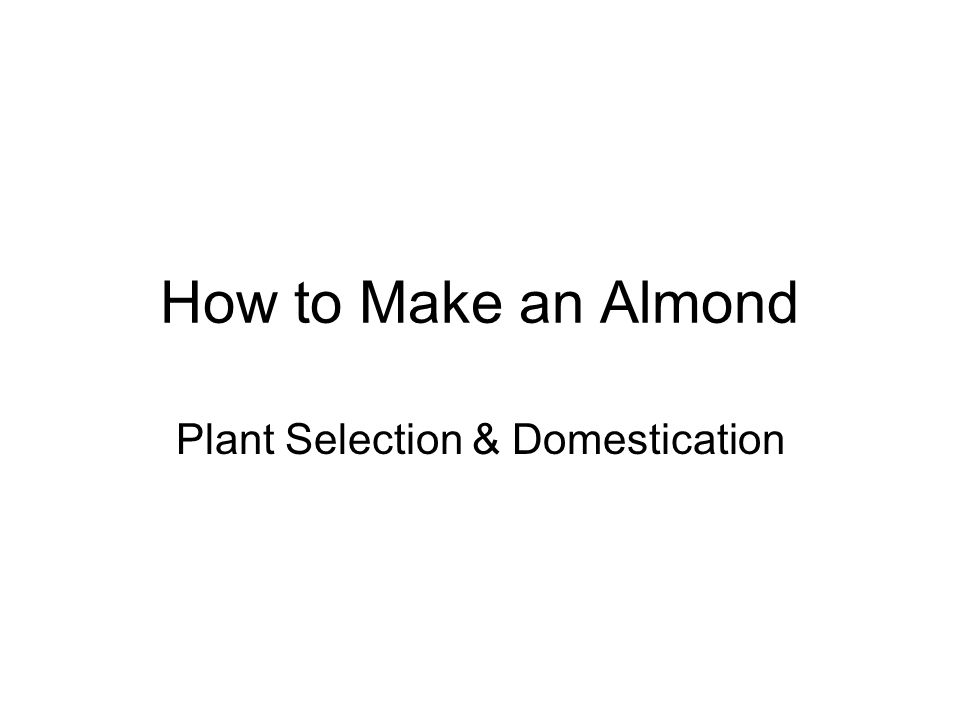 How to Make an Almond Modern Crop Development Methods: –Simple Seed Selection –Intentional Hybridization –Muta-genesis –Genetic Manipulation