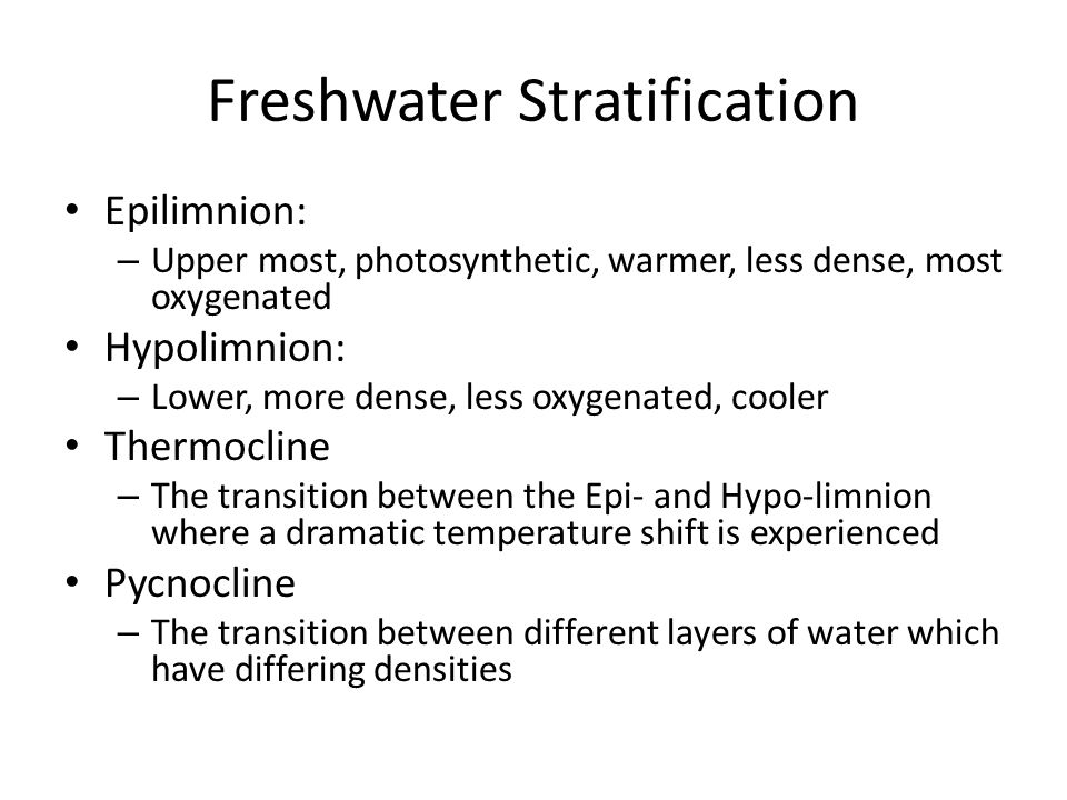 Freshwater Stratification Epilimnion: – Upper most, photosynthetic, warmer, less dense, most oxygenated Hypolimnion: – Lower, more dense, less oxygenated, cooler Thermocline – The transition between the Epi- and Hypo-limnion where a dramatic temperature shift is experienced Pycnocline – The transition between different layers of water which have differing densities