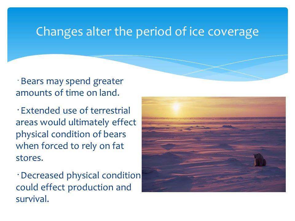 Changes alter the period of ice coverage ・ Bears may spend greater amounts of time on land.