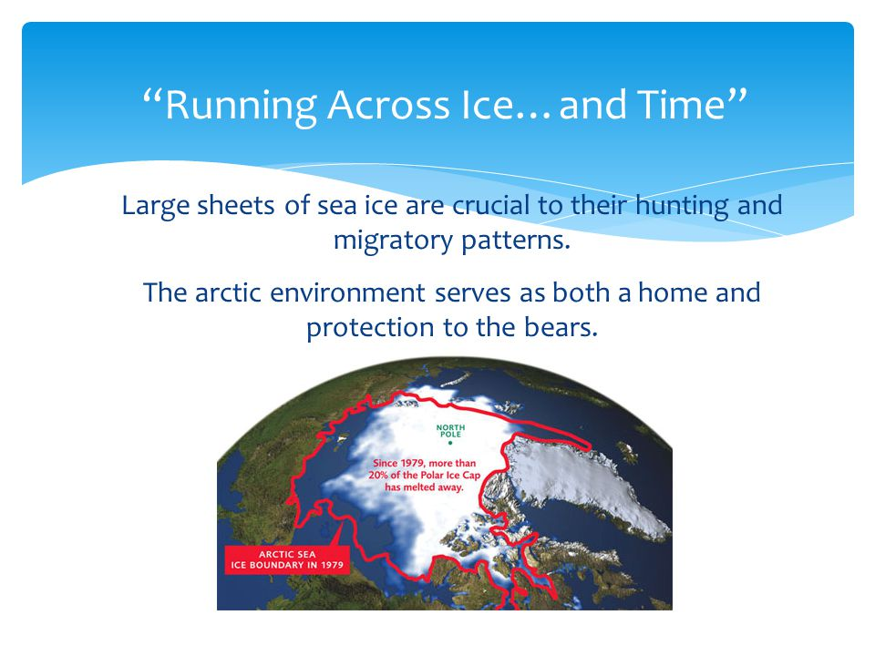 Why should we care about the polar bear.