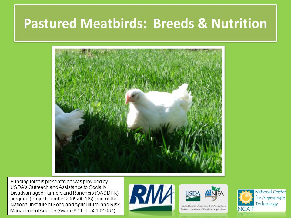 Pastured Meatbirds: Breeds & Nutrition Funding for this presentation was provided by USDA s Outreach and Assistance to Socially Disadvantaged Farmers and Ranchers (OASDFR) program (Project number 2009-00705), part of the National Institute of Food and Agriculture, and Risk Management Agency (Award # 11-IE-53102-037)