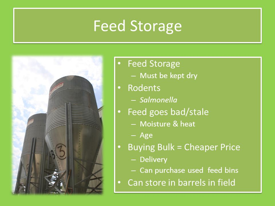 Feed Storage – Must be kept dry Rodents – Salmonella Feed goes bad/stale – Moisture & heat – Age Buying Bulk = Cheaper Price – Delivery – Can purchase used feed bins Can store in barrels in field Feed Storage – Must be kept dry Rodents – Salmonella Feed goes bad/stale – Moisture & heat – Age Buying Bulk = Cheaper Price – Delivery – Can purchase used feed bins Can store in barrels in field