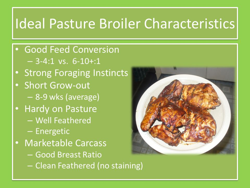 Ideal Pasture Broiler Characteristics Good Feed Conversion – 3-4:1 vs. 6-10+:1 Strong Foraging Instincts Short Grow-out – 8-9 wks (average) Hardy on P