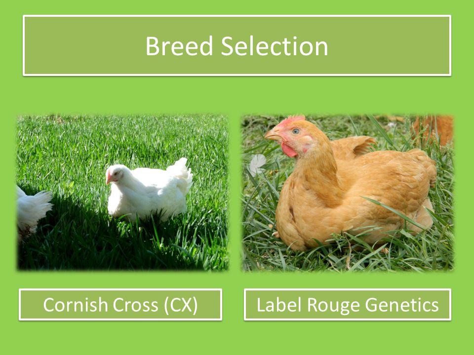Breed Selection Cornish Cross (CX) Label Rouge Genetics