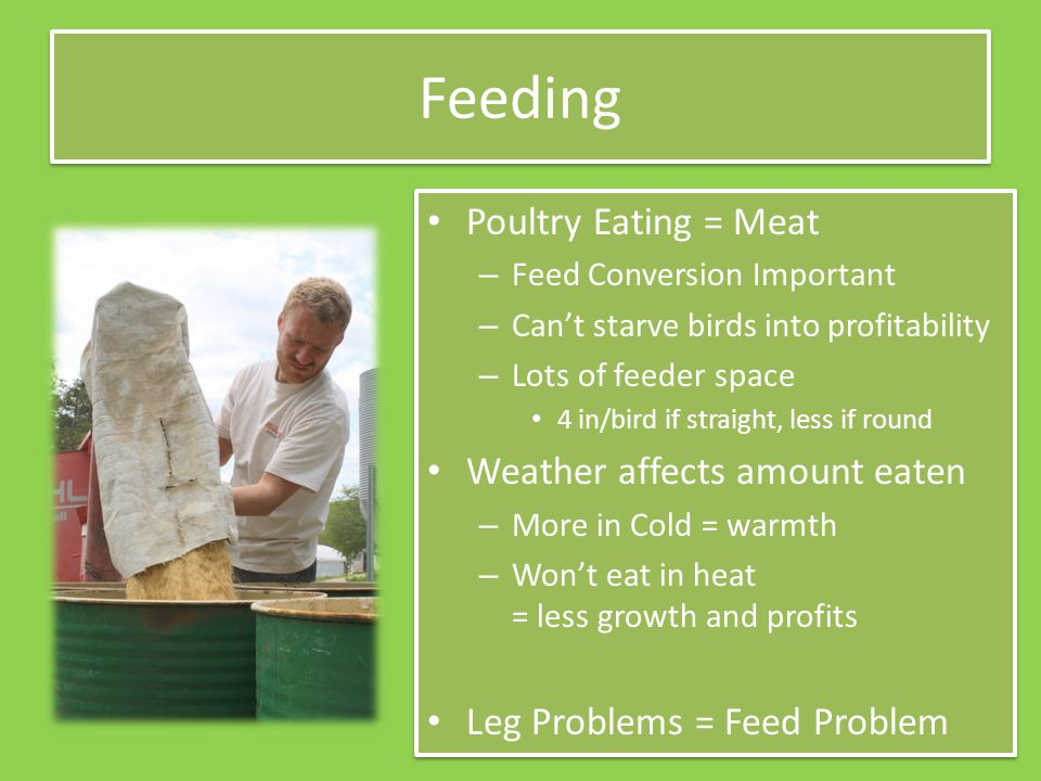 Feeding Poultry Eating = Meat – Feed Conversion Important – Can't starve birds into profitability – Lots of feeder space 4 in/bird if straight, less if round Weather affects amount eaten – More in Cold = warmth – Won't eat in heat = less growth and profits Leg Problems = Feed Problem Poultry Eating = Meat – Feed Conversion Important – Can't starve birds into profitability – Lots of feeder space 4 in/bird if straight, less if round Weather affects amount eaten – More in Cold = warmth – Won't eat in heat = less growth and profits Leg Problems = Feed Problem