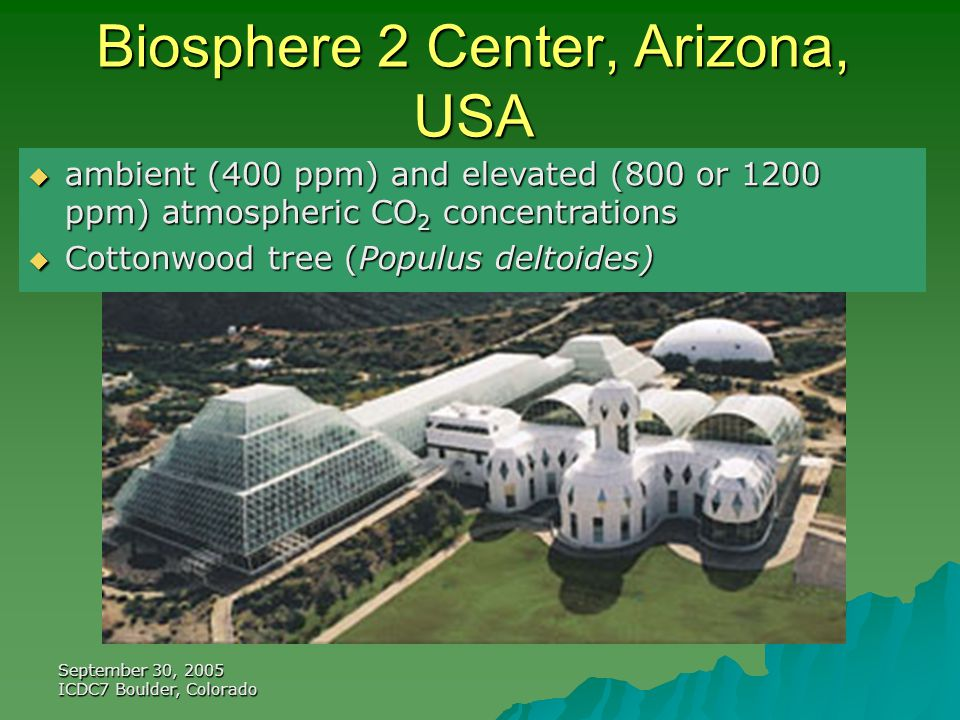 September 30, 2005 ICDC7 Boulder, Colorado Biosphere 2 Center, Arizona, USA  ambient (400 ppm) and elevated (800 or 1200 ppm) atmospheric CO 2 concentrations  Cottonwood tree (Populus deltoides)