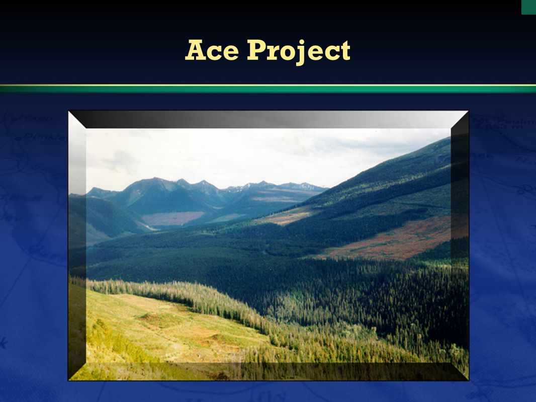 Ace Project
