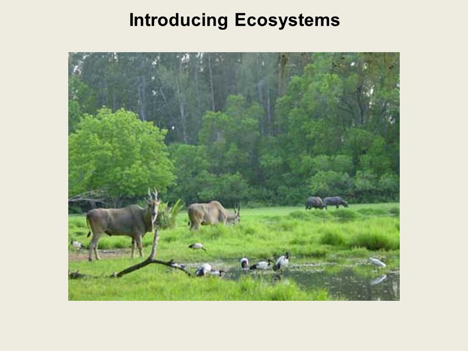 Introducing Ecosystems Biotic or Abiotic? 1. boulder-abiotic 2. rain-abiotic 3. lightning-abiotic
