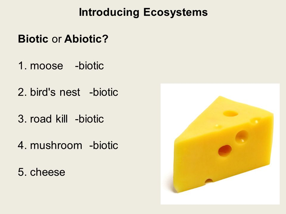 Introducing Ecosystems Biotic or Abiotic. 1. moose-biotic 2.