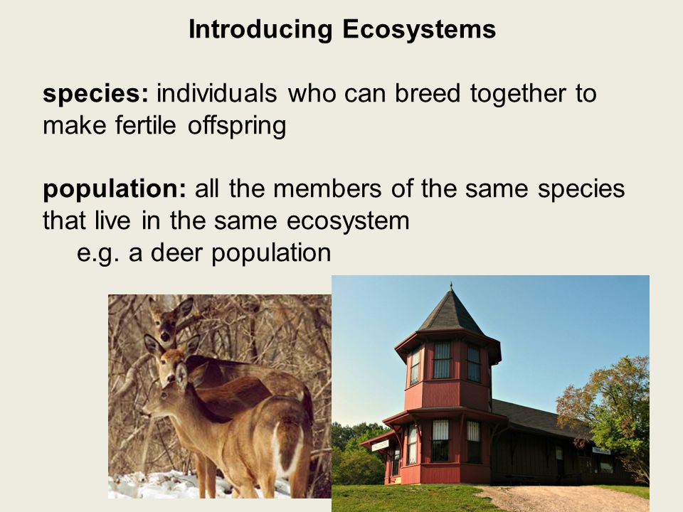 Introducing Ecosystems species: individuals who can breed together to make fertile offspring population: all the members of the same species that live in the same ecosystem e.g.