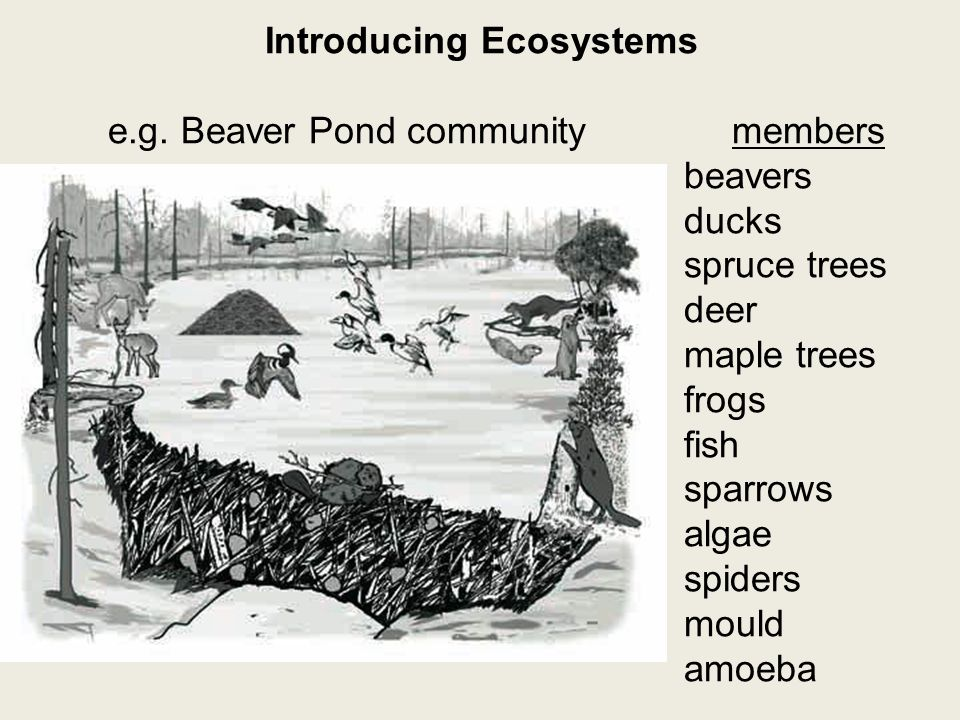 Introducing Ecosystems e.g.