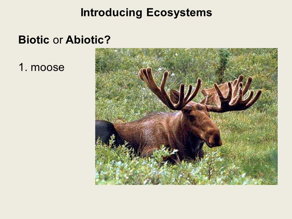 Introducing Ecosystems Biotic or Abiotic? 1. moose-biotic