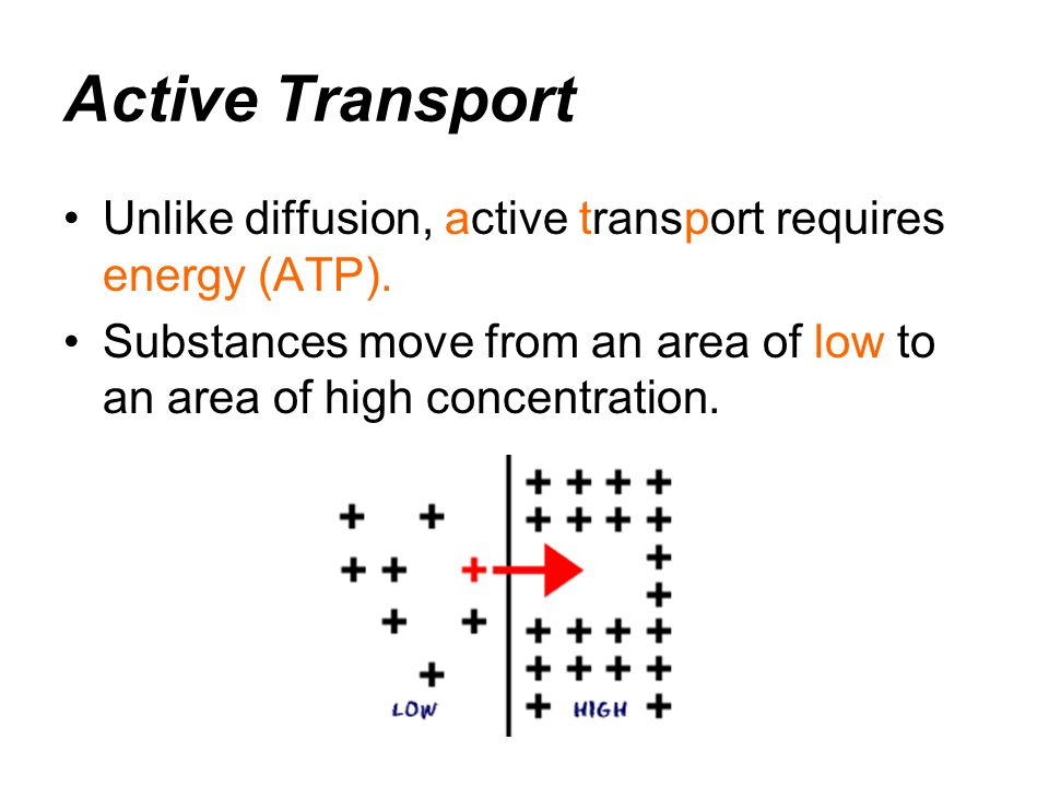 Active Transport Unlike diffusion, active transport requires energy (ATP).