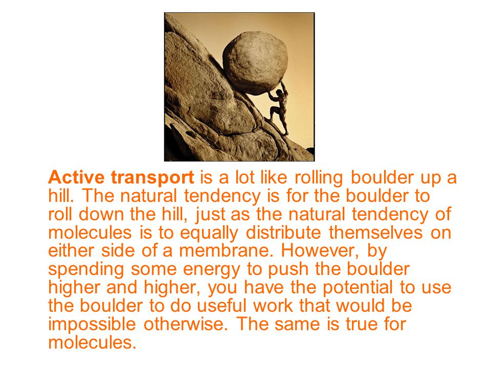 Active transport is a lot like rolling boulder up a hill.