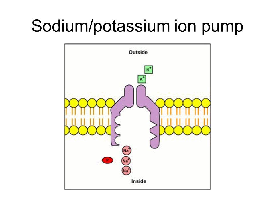 Sodium/potassium ion pump