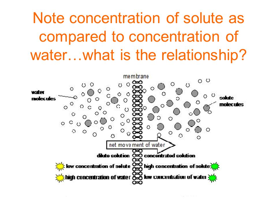 Note concentration of solute as compared to concentration of water…what is the relationship?