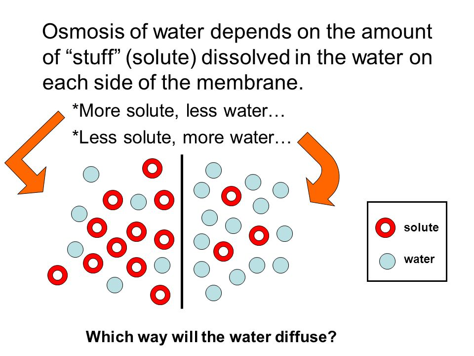 Osmosis of water depends on the amount of stuff (solute) dissolved in the water on each side of the membrane.