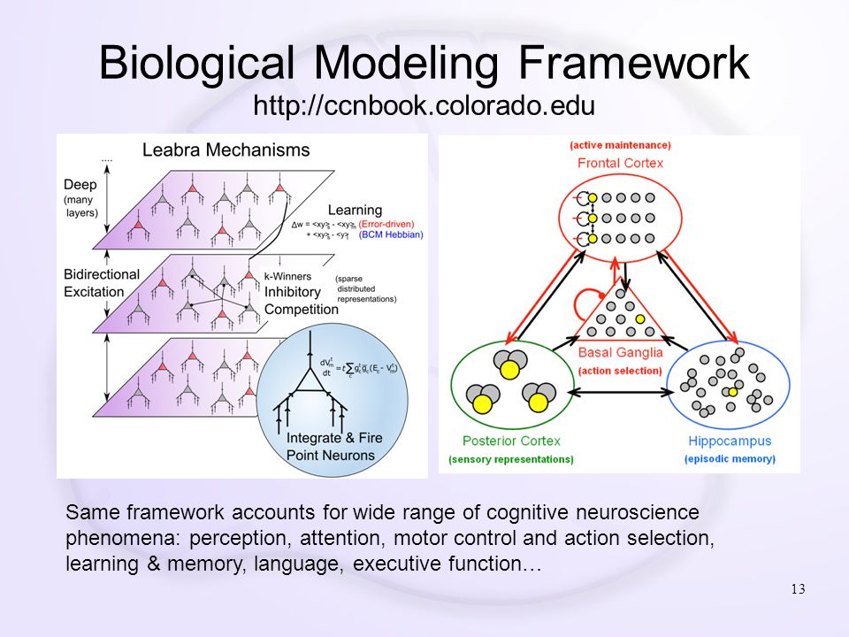 Biological Modeling Framework http://ccnbook.colorado.edu 13 Same framework accounts for wide range of cognitive neuroscience phenomena: perception, a