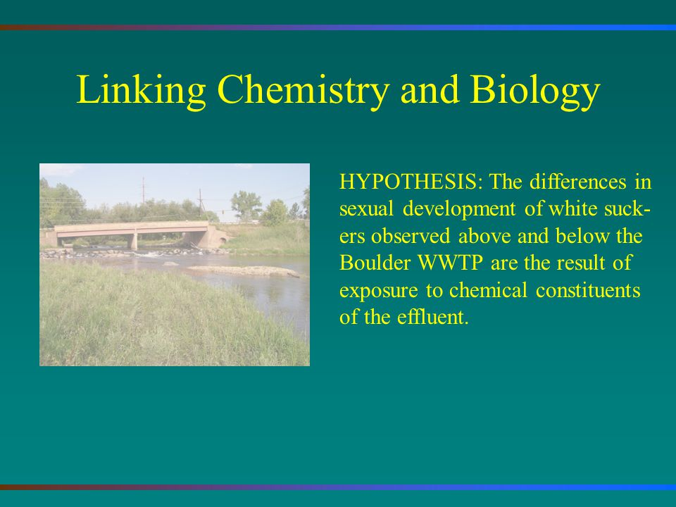 Linking Chemistry and Biology HYPOTHESIS: The differences in sexual development of white suck- ers observed above and below the Boulder WWTP are the result of exposure to chemical constituents of the effluent.