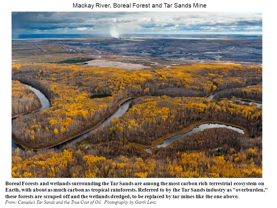 Mackay River, Boreal Forest and Tar Sands Mine Boreal Forests and wetlands surrounding the Tar Sands are among the most carbon rich terrestrial ecosystem on Earth, with about as much carbon as tropical rainforests.