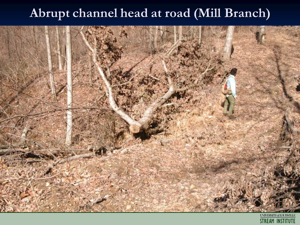 STREAM INSTITUTE Abrupt channel head at road (Mill Branch)
