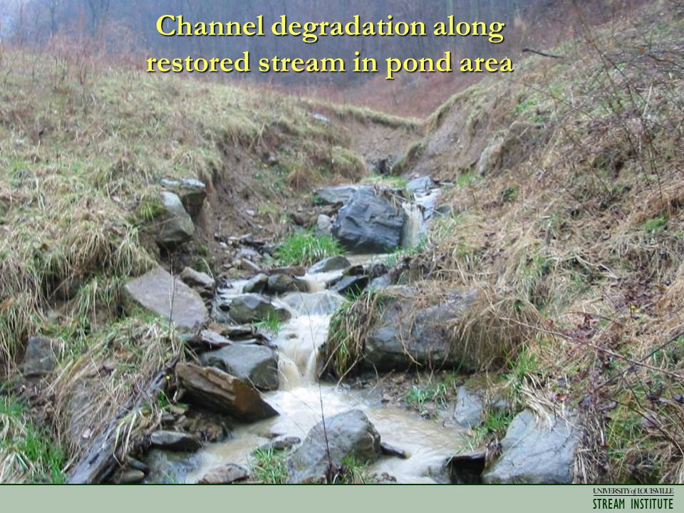 STREAM INSTITUTE Channel degradation along restored stream in pond area