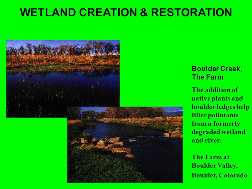 WETLAND CREATION & RESTORATION Boulder Creek, The Farm The addition of native plants and boulder ledges help filter pollutants from a formerly degraded wetland and river.