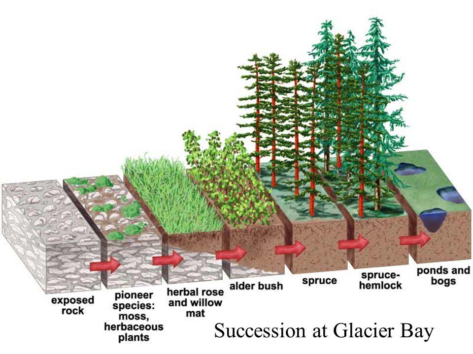 Succession at Glacier Bay