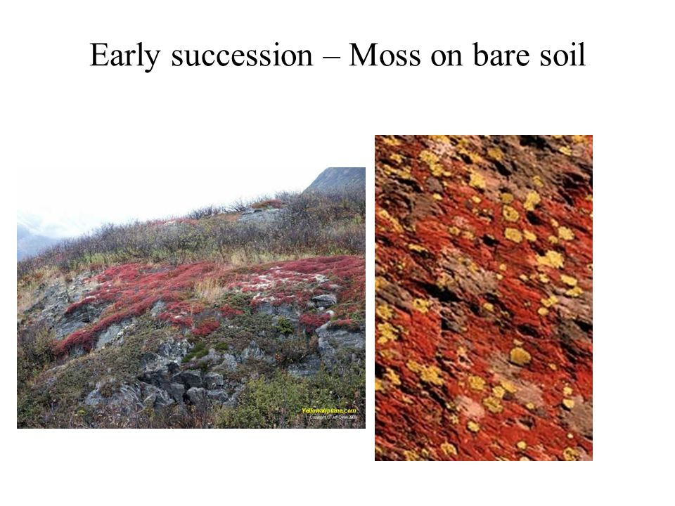 Early succession – Moss on bare soil