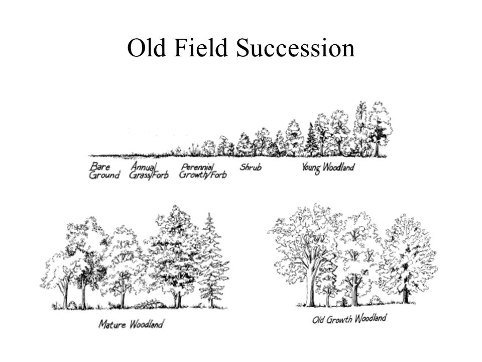 Old Field Succession