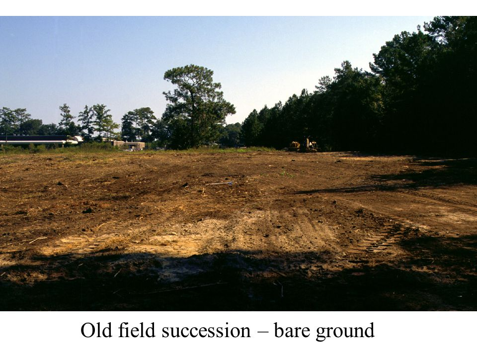 Old field succession – bare ground