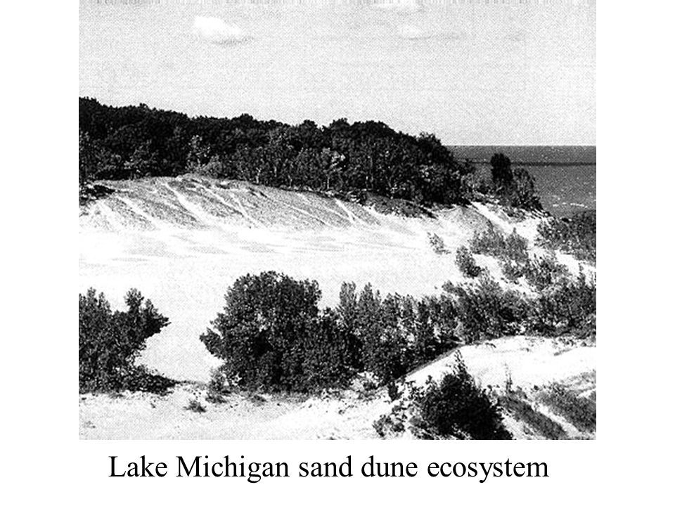 Lake Michigan sand dune ecosystem