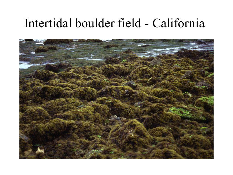 Intertidal boulder field - California